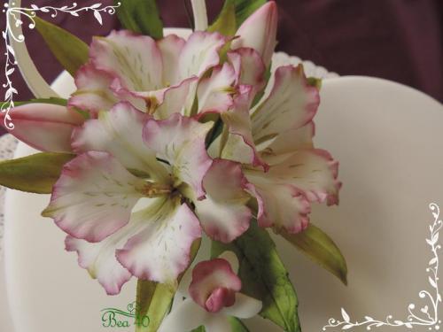 alstromérie a mini orchidee