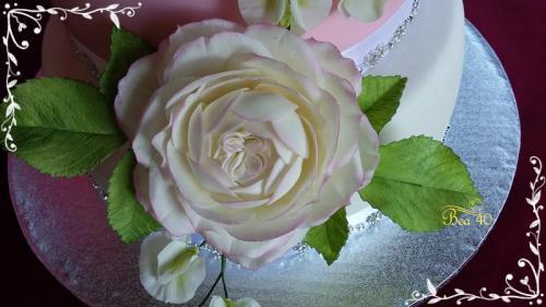 anglická ruža a hrášok