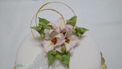 lily nomocharis